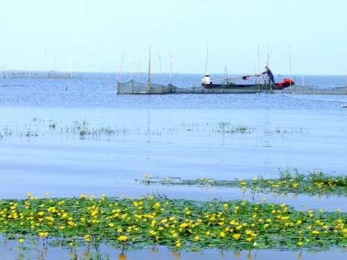 水陆空保护动物要图片和名字