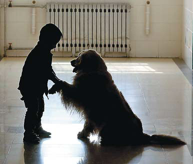 lucky a therapy dog plays with an autistic child at the ...