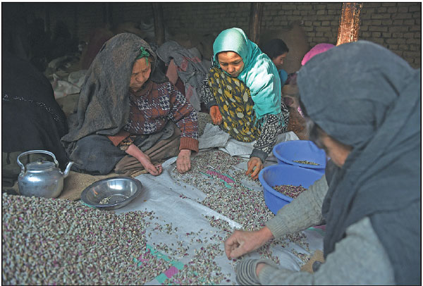 laborers prepare pistachio seeds at a factory in kabul afghanistan in 2014 the country takes. Black Bedroom Furniture Sets. Home Design Ideas