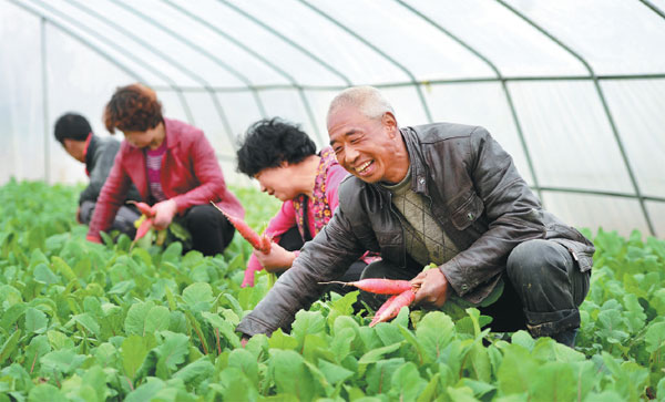 liu xiaoyang a vegetable farmer in chengxian gansu ...