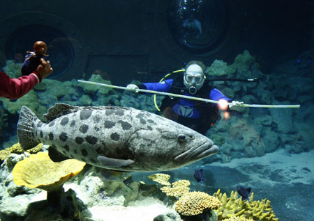 Zookeeper reiner reusch tries to measure a grouper watched by a young