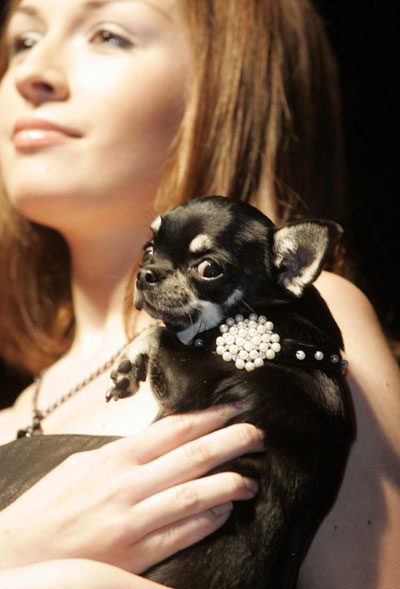 Pets Fashion Week Russia in Moscow
