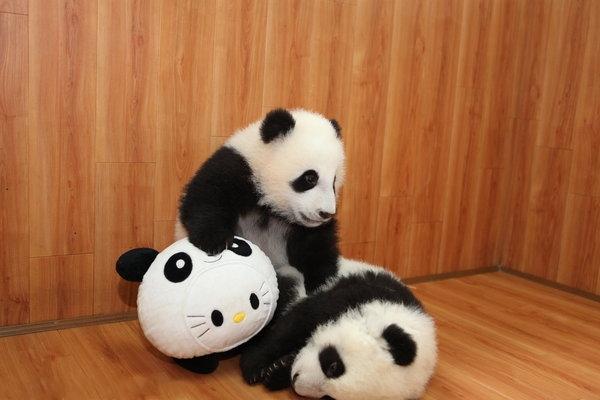 Panda cubs playing on slide