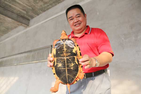 Link to Turtle power propels Qinzhou