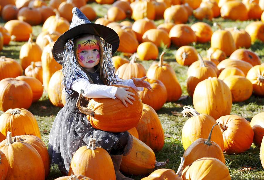 Studts pumpkin patch gj co news
