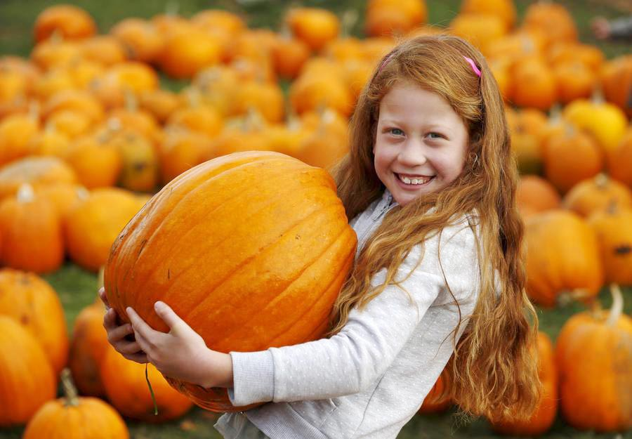 Studts Pumpkin Patch and Corn Maze