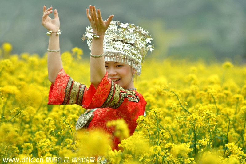 canola flower attractions in guizhou business chinadaily com cn