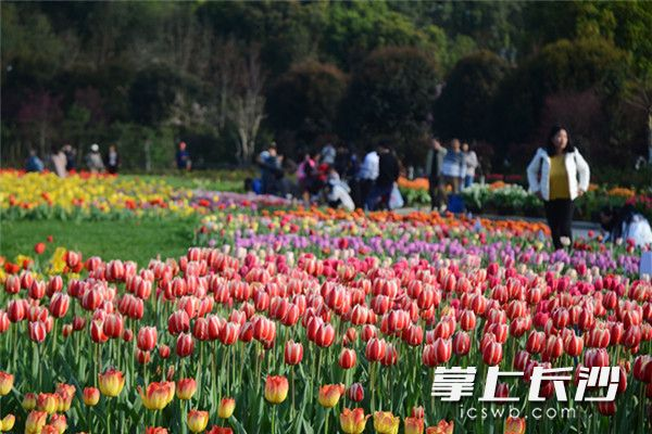 Hunan Forest Botanical Garden comes to life
