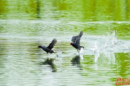 Songya Lake honored 'Beautiful Lake in the Yangtze River Economic Belt'
