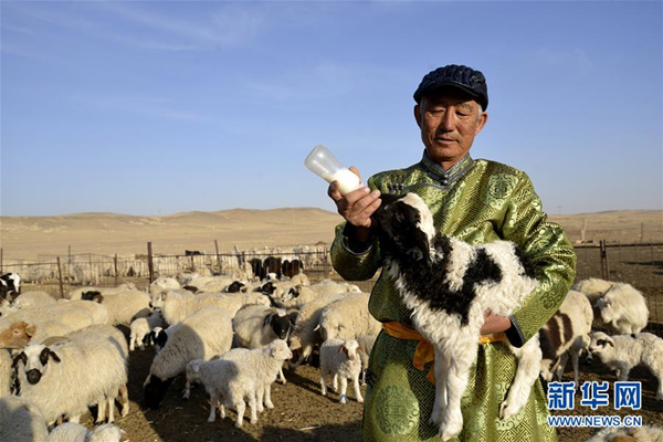 Bayannur China  city photos : Herdsman feeding a lamb in Urad Middle Banner, Inner Mongolia, on ...