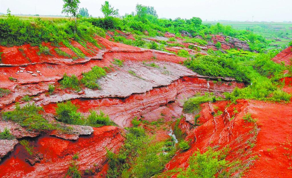莱阳发现中国最大恐龙化石群 将建东方侏罗纪公园
