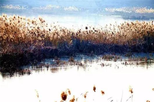 Early winter scenes on Yantai's Jiahe River[1]