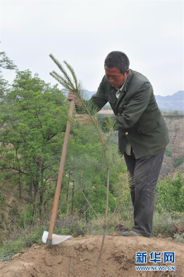 Incomes rise through tree planting in Shanxi