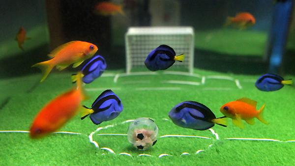 Fish At Japan Aquarium Play Soccer Before World Cup