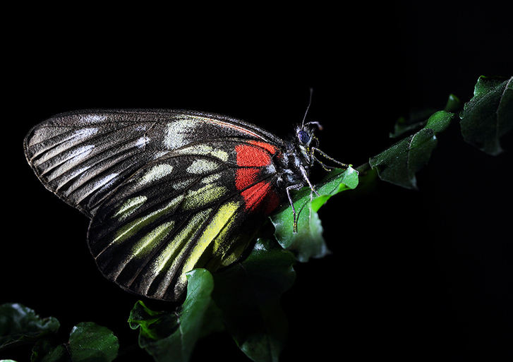 Feast for butterfly lovers - photos by Zhong Ming
