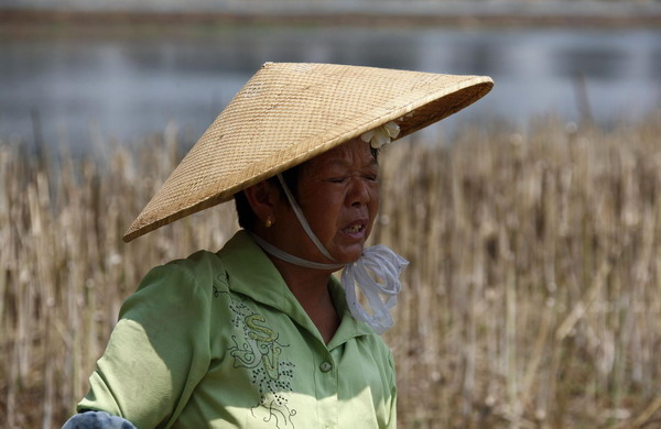 chinese farmers - photo #28