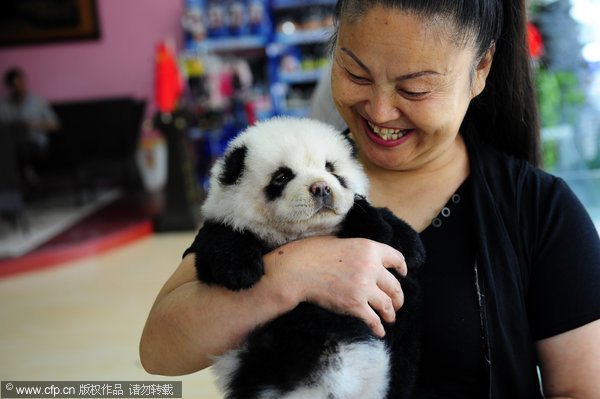 China's latest craze: dyeing pets to look like other wild ...