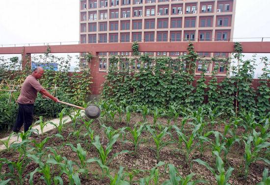 Roof Vegetable Garden In Zhejiang 1 Chinadaily Com Cn