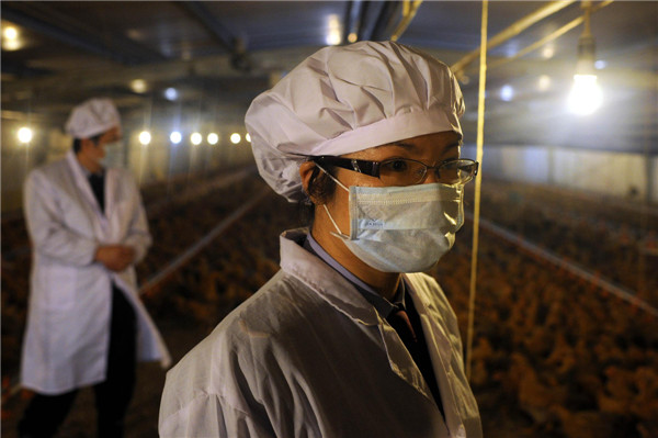 Ensuring safety of poultry sent to hk macao 3 for Bureau quarantine