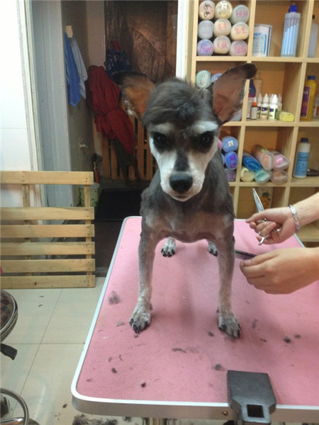 Pets In Ne China Are Well Groomed7 Chinadailycomcn
