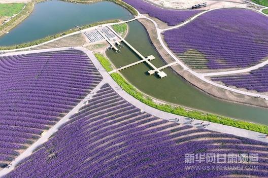 Jinchang China  city photos : Jinchang: industrial city to lavender kingdom China Chinadaily.com ...