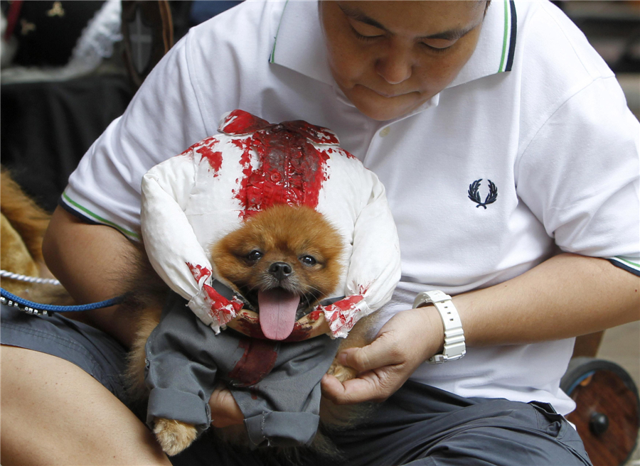 Pets halloween costume competition in Philippines  sc 1 st  China Daily & Pets halloween costume competition in Philippines[5]- Chinadaily.com.cn