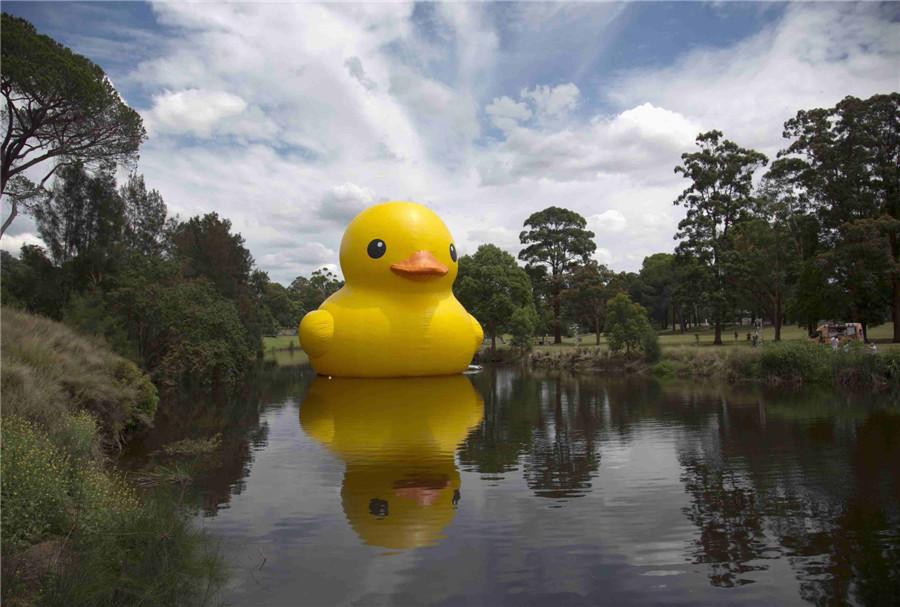 Giant Rubber Duck Sparks Sydney Festival