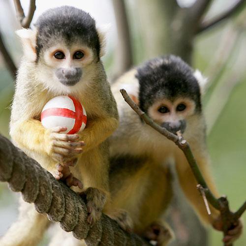 monkey+enjoys