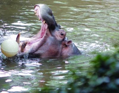 这些动物在南京生活得如何?让我们一探究竟.