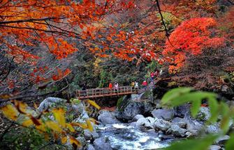 Autumn scenery in Xixi Wetland[1]