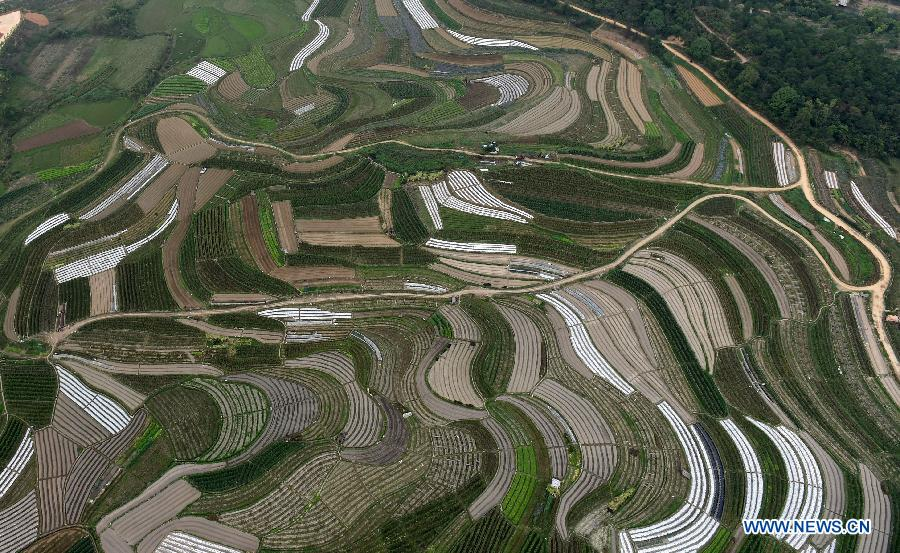Aerial view of rural areas in Nanning, Guangxi[1]