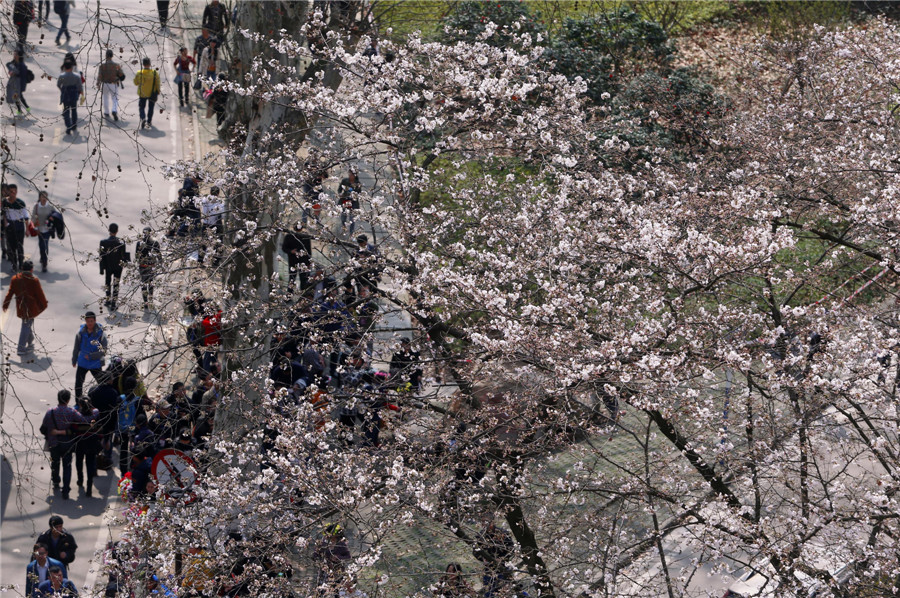 Spring flowers bloom across China[1]
