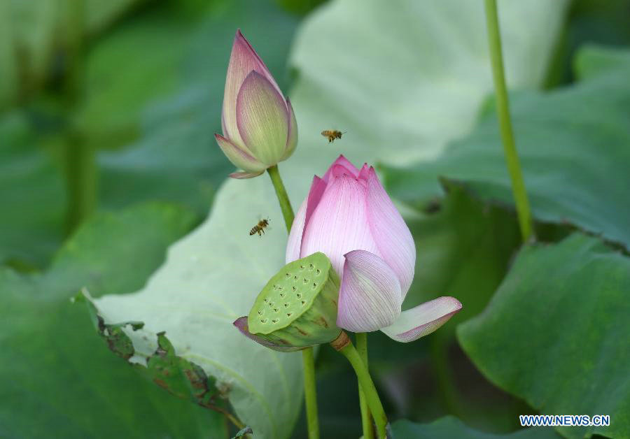 Lotus root industrial park attracts visitors in South China[1]