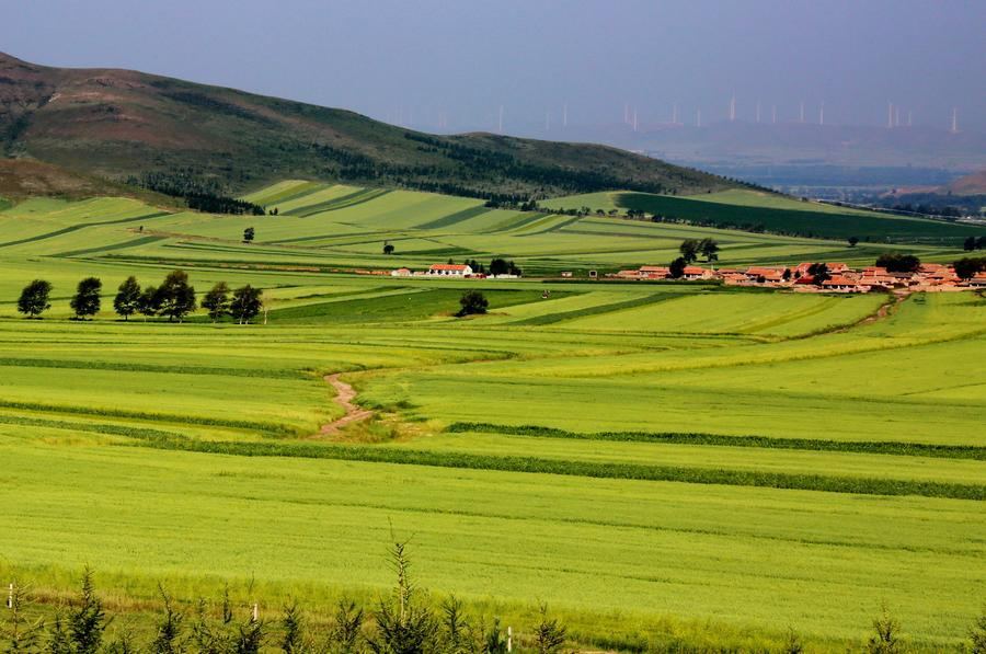 Scenery of fields in Hebei's Zhangjiakou[1]
