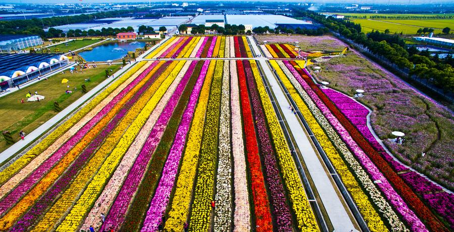 Bird's-eye view of colorful landscape in Shanghai[1]