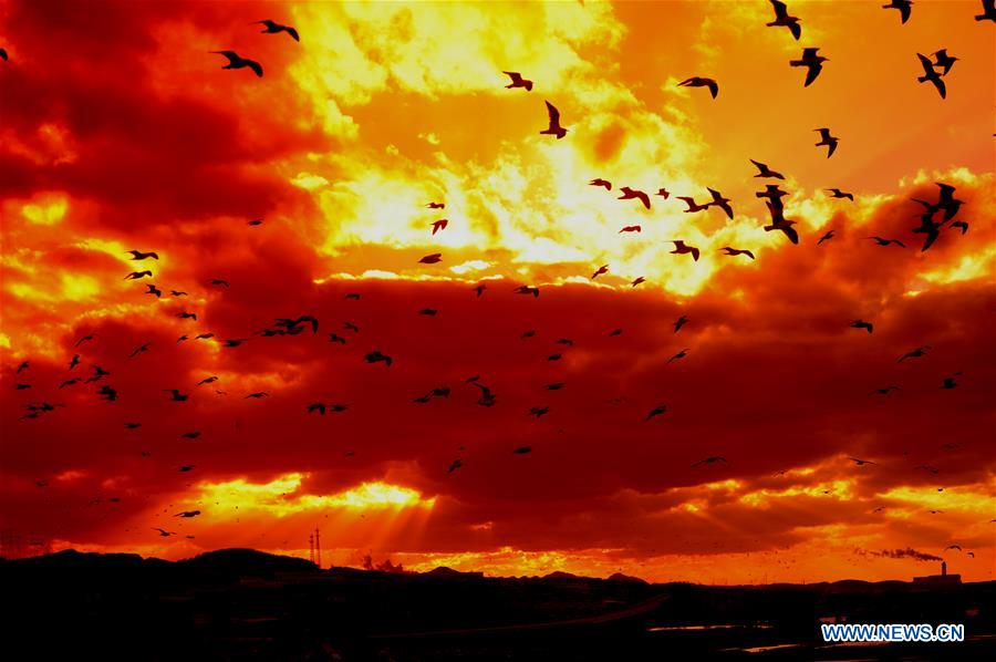 Stunning scenery of crimson clouds in NE China[1]
