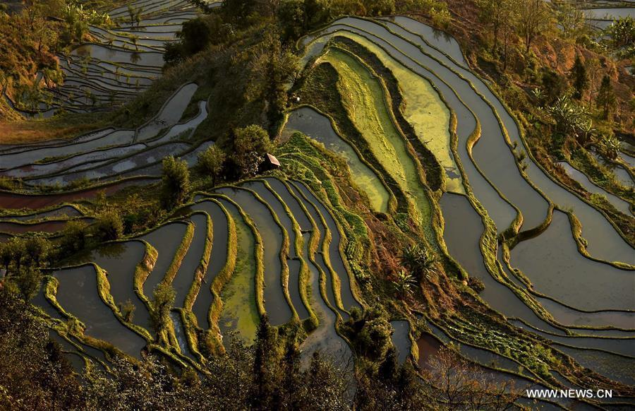 Wonder of farming civilization: Hani terraces in Yunnan[1]
