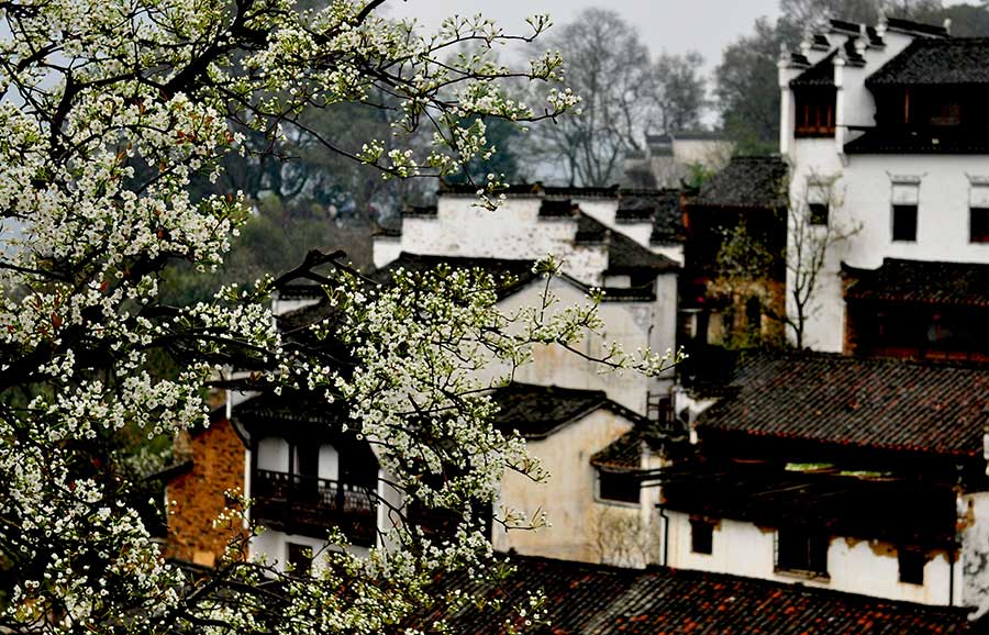 Flowery spring comes to Wuyuan, Jiangxi province[1]- Chinadaily.com.cn