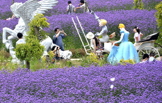 Inhale The Romance Of Lavender