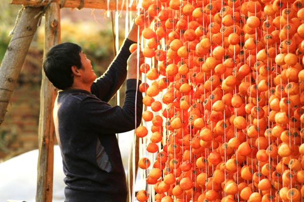 Villages of persimmons[1]- Chinadaily.com.cn