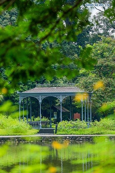 Singapore Botanic Gardens declared UNESCO World Heritage Site[1 ...