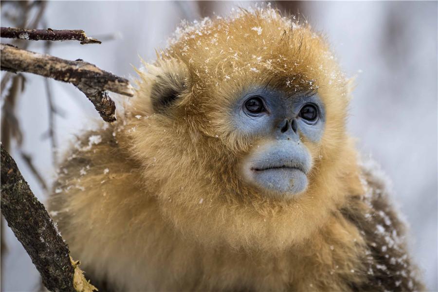 monkey business pdf marc hauser