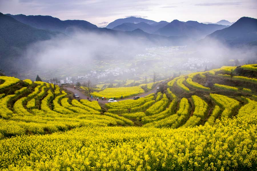 10 places to enjoy canola flowers in china 1 chinadaily com cn