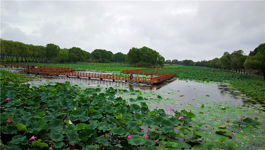 The Beautiful Scenery Of Honghu Eco Agricultural Tourism Garden After Rain Aug 13 2017 Photo By Liu Xuanyi Chinadailycn