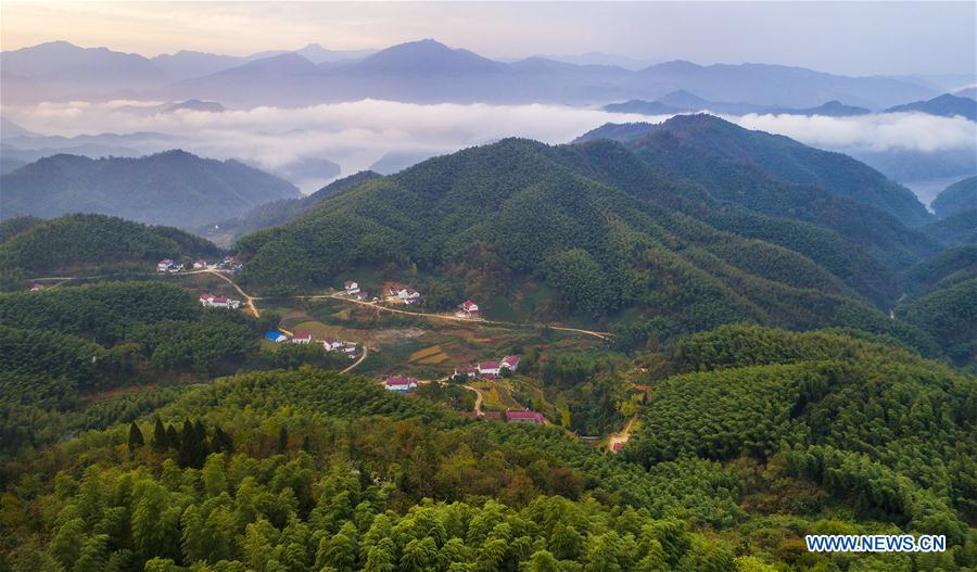 Scenery of bamboos forest, sea of clouds in China's Anhui