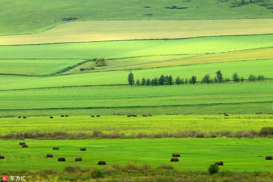 China's renowned pure grassland: Hulunbuir Grassland[1 ...