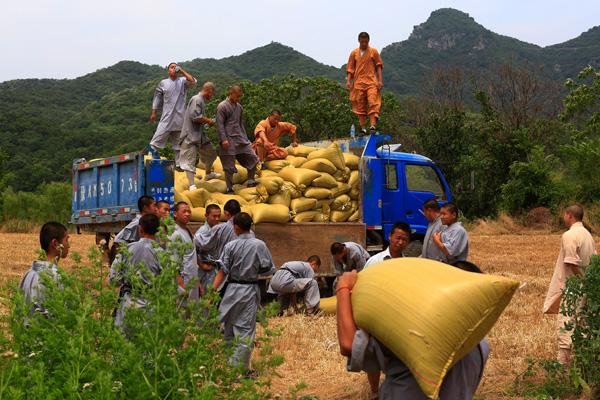 Shaolin monks harvest bumper crop