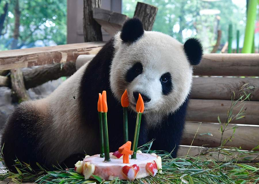 Panda Birthday Cake Pictures