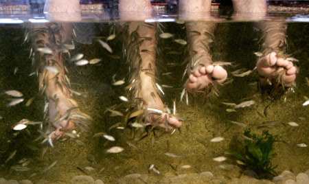39 doctor 39 fish helps treat skin diseases for Fish eating dead skin spa