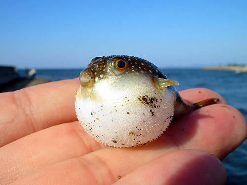 Weird Fish Captured By Us Fisherman